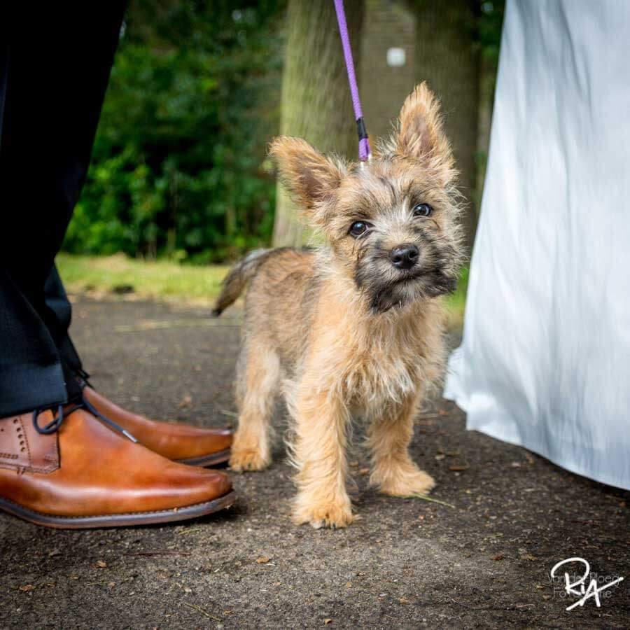 huwelijk fotograaf regio Eindhoven hondje