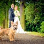Bruidsfotograaf gezocht eindhoven hond fotograaf bruiloft