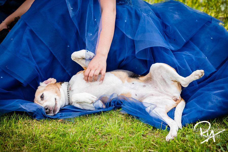 fotografie hond Eindhoven bruidsfotografie