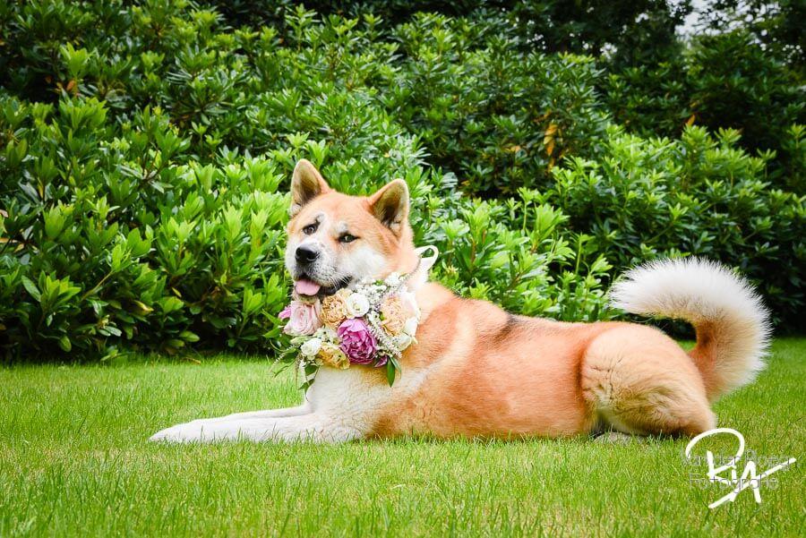 Fotograaf Oisterwijk bruiloft huwelijk hond